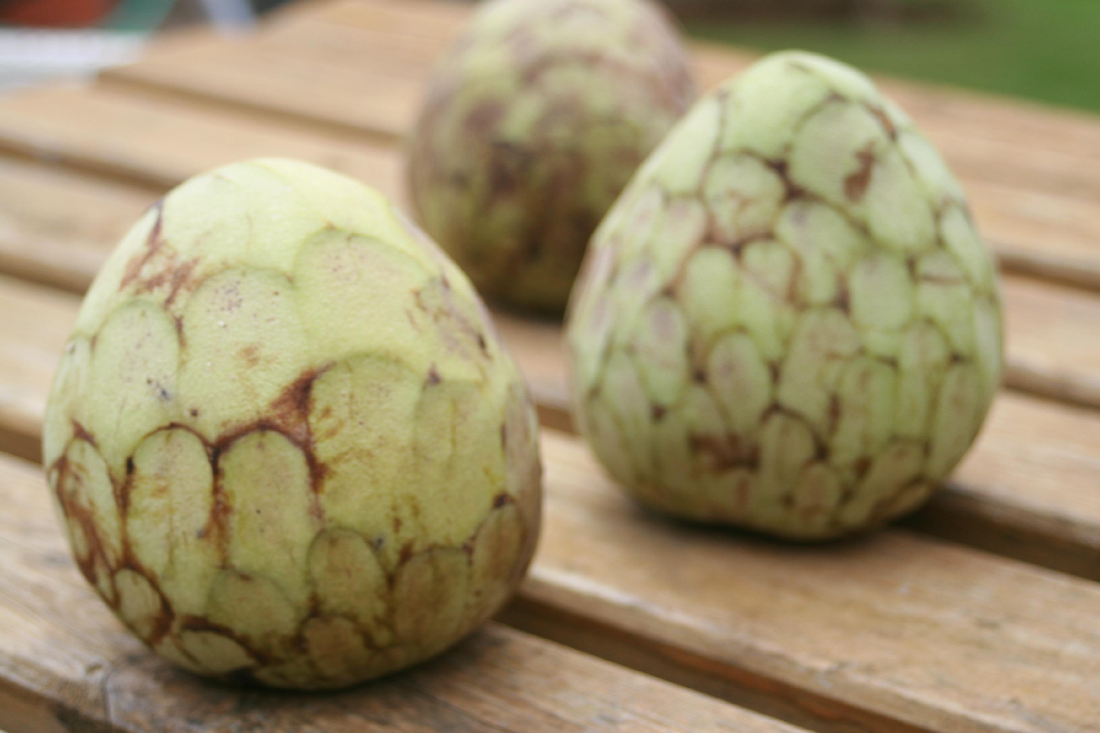 jamaican custard apple - photo #20
